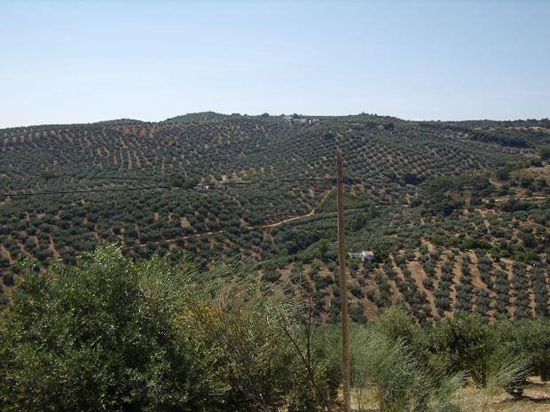 algarinejo-aldea-la-vina2