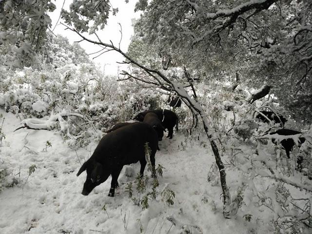 Cortes de la Frontera nevada 19/01/2017