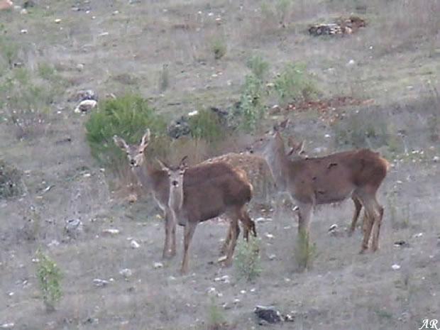 Parque Natural de Sierras de Cazorla, Segura y Las Villas
