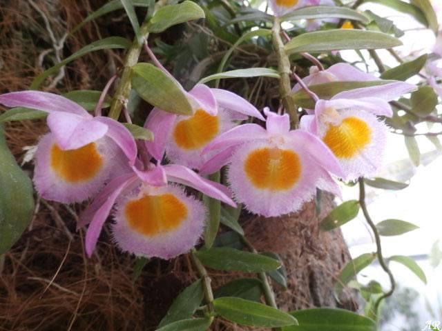 orquideas, orquidea