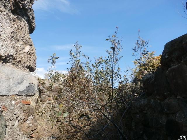 torre-de-benamarin-alta1