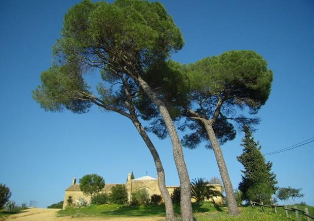 Ermita de san roque monumento religioso de alcal de guada ra - Alquiler de casas en alcala de guadaira ...