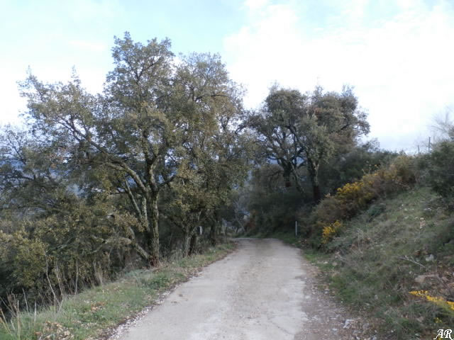 """Pista de descenso de BTT """"Barranco de la Loma"""" Algatocín"""