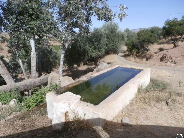 Fuente de Villarias - Arroyo Coche - Almogía - Abrevadero