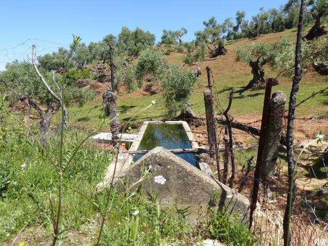 Tío Mateo Fountain