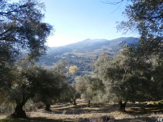 Panorámica del Valle del Guadiaro