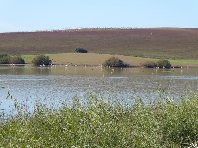 Laguna de Capacete - Campillos