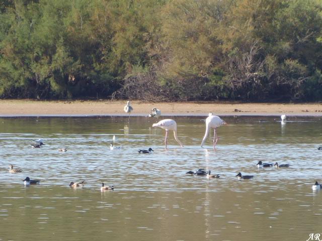 Capacete Lagoon - Campillos