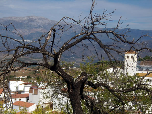 Iznate andalusian municipality at the axarquia malague a - Casa rural iznate ...
