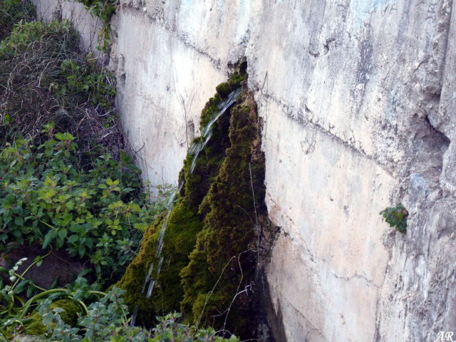 Fuente Injerta (Guaerta) - Yunquera