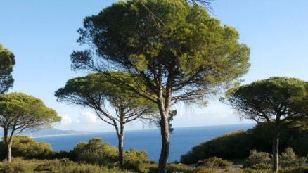 Parque Natural La Breña y Marismas del Barbate
