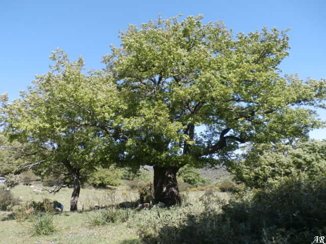 Los Alcornocales Natural Park - The Cork Oak Natural Park
