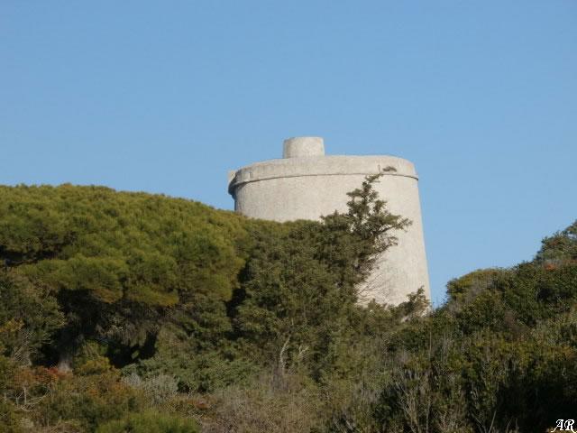 Parque Natural La Breña y Marismas del Barbate - Torre del Tajo