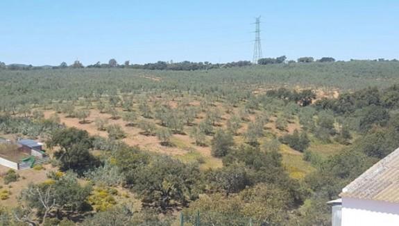 venta de finca ganadera, olivar y agrícola en Aznalcóllar, finca en Sevilla