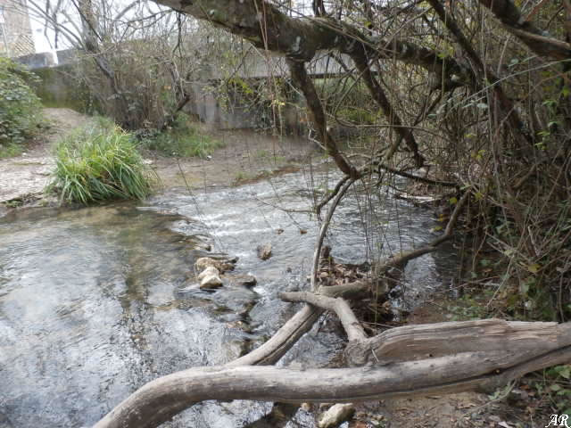 Sendero Río Majaceite - El Bosque
