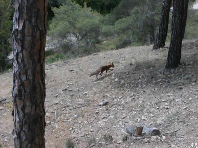 Paraje Natural Desfiladero de los Gaitanes - Zorro - Gandano
