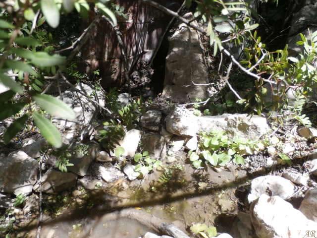 Cortes de la Frontera - Fuente de los Granujales - Manantial de los Granujales