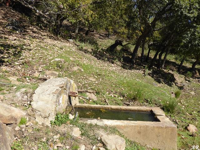Fuente de Huerto Muñoz - Monte Público de El Robledal - El Colmenar - Cortes de la Frontera
