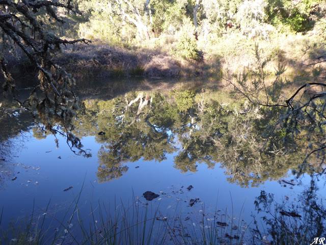 Laguna de la Greera - Cortes de la Frontera - Parque Natural de los Alcornocales