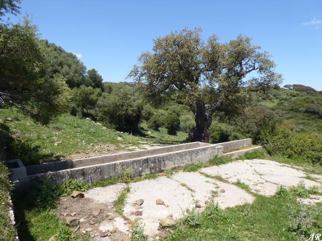 Fuente del Rancho de los Dornajos - Cortes de la Frontera